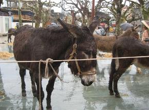 Feira do burro de Carral