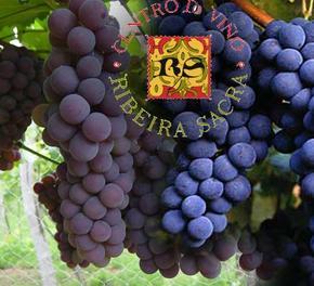 62 mostras para a XVII Cata dos Viños da Ribeira Sacra.